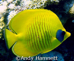 Taken at Panorama Reef, Safaga. Sony DSC W90 with WB Hous... by Andy Hamnett 